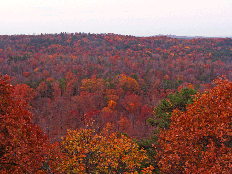 Fall landscape.