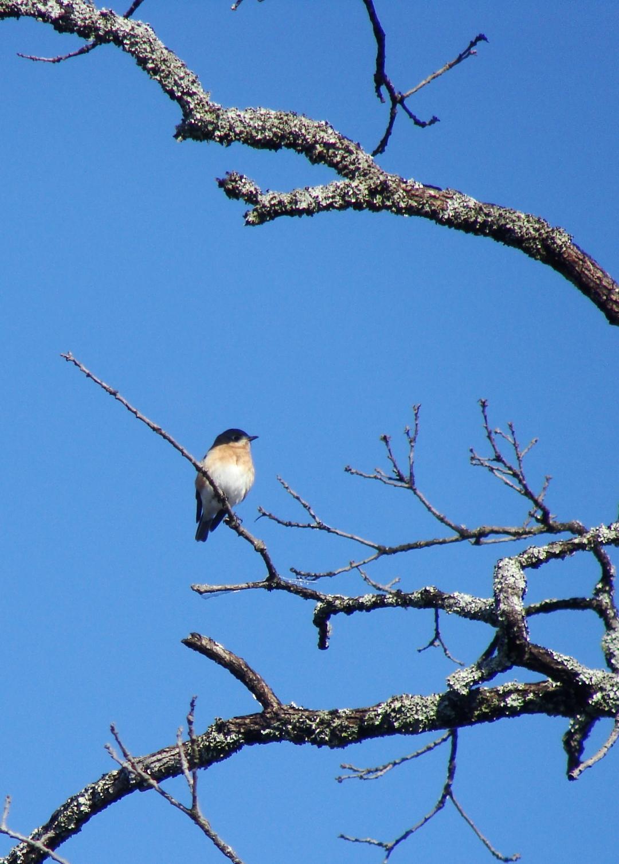 12-11 BlueBird2-crop