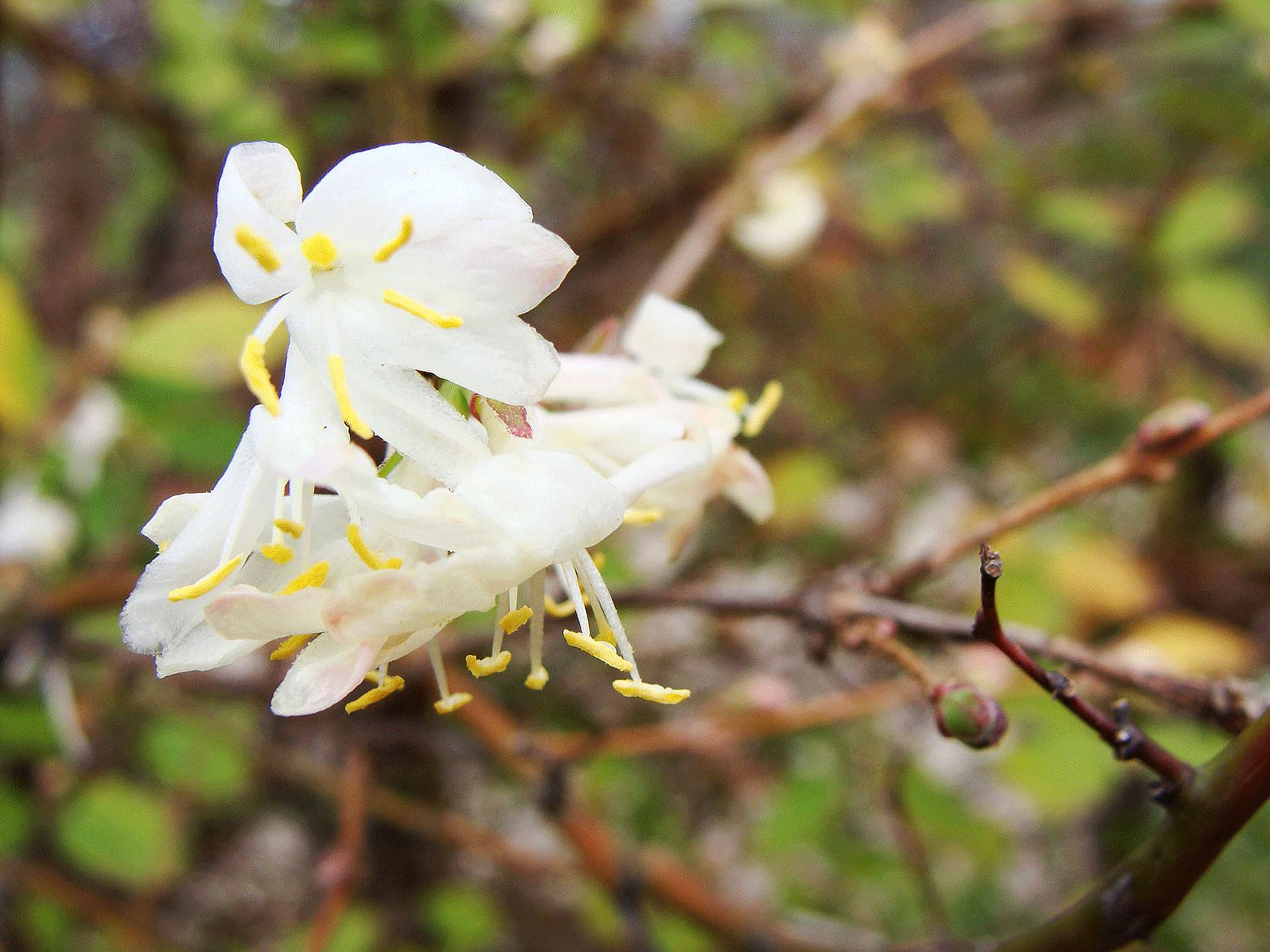 2-23-SpringFloral