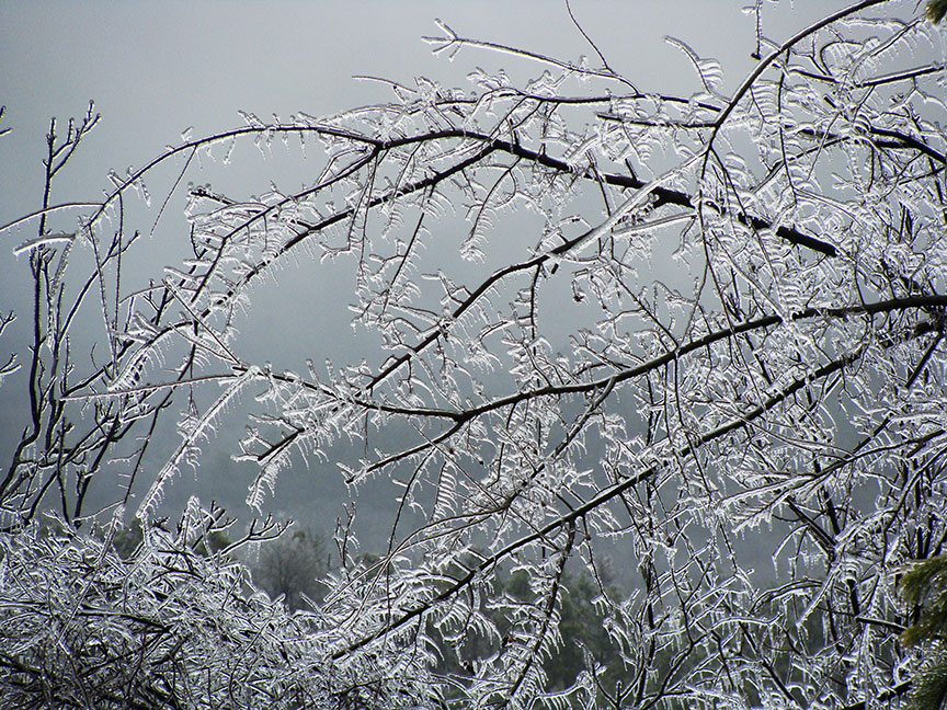 Ice-covered branches on the mountain.