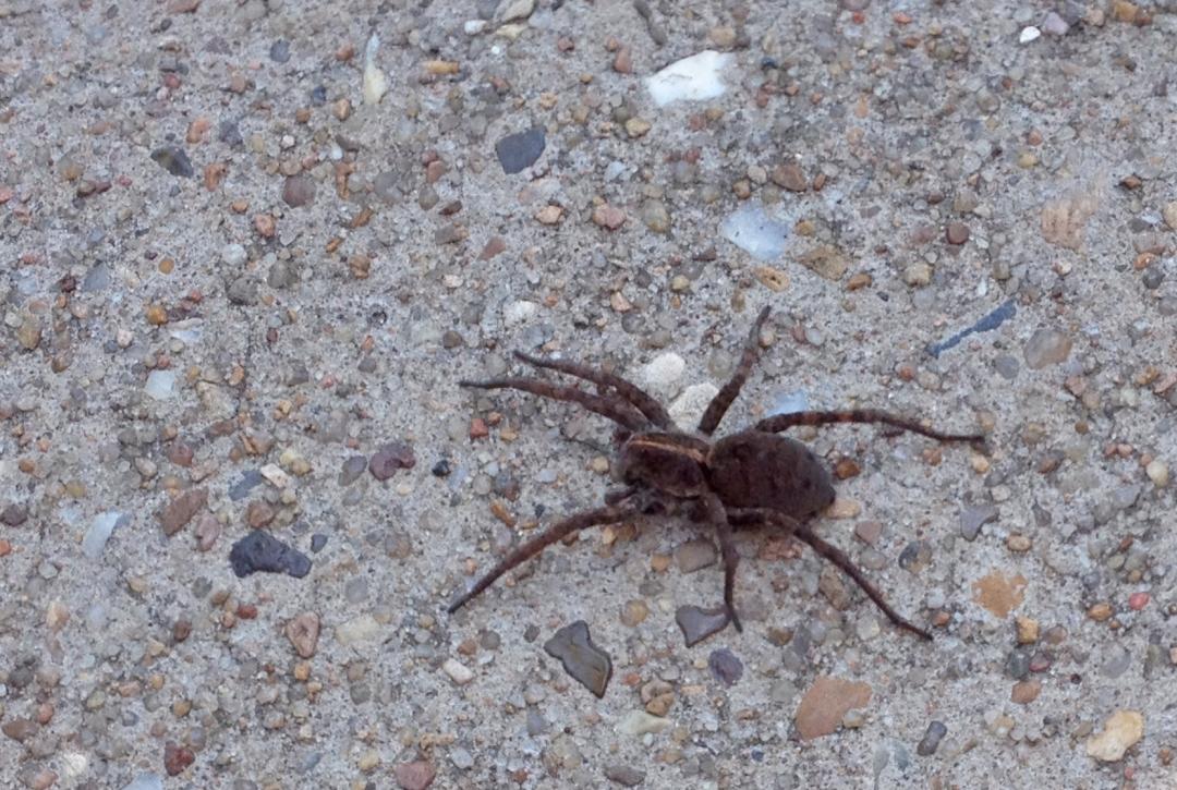 Big spider.