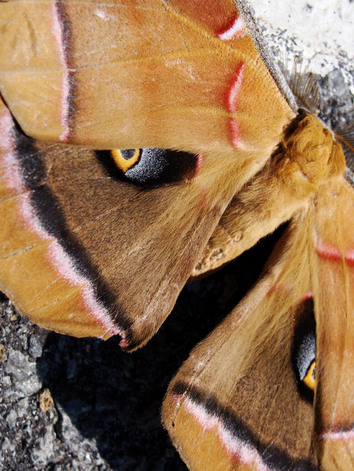 Closeup of moth wing markings.