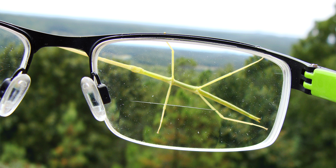 Green walkingstick on eyeglasses.