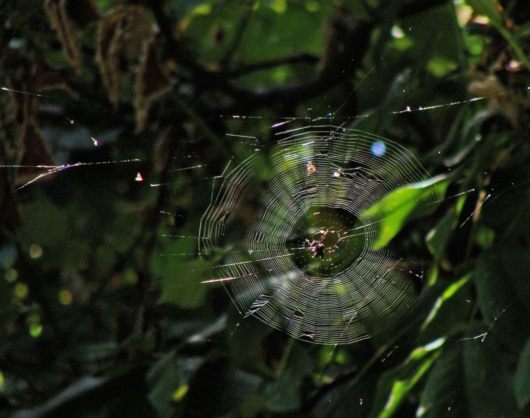 Orb spider web backlit.