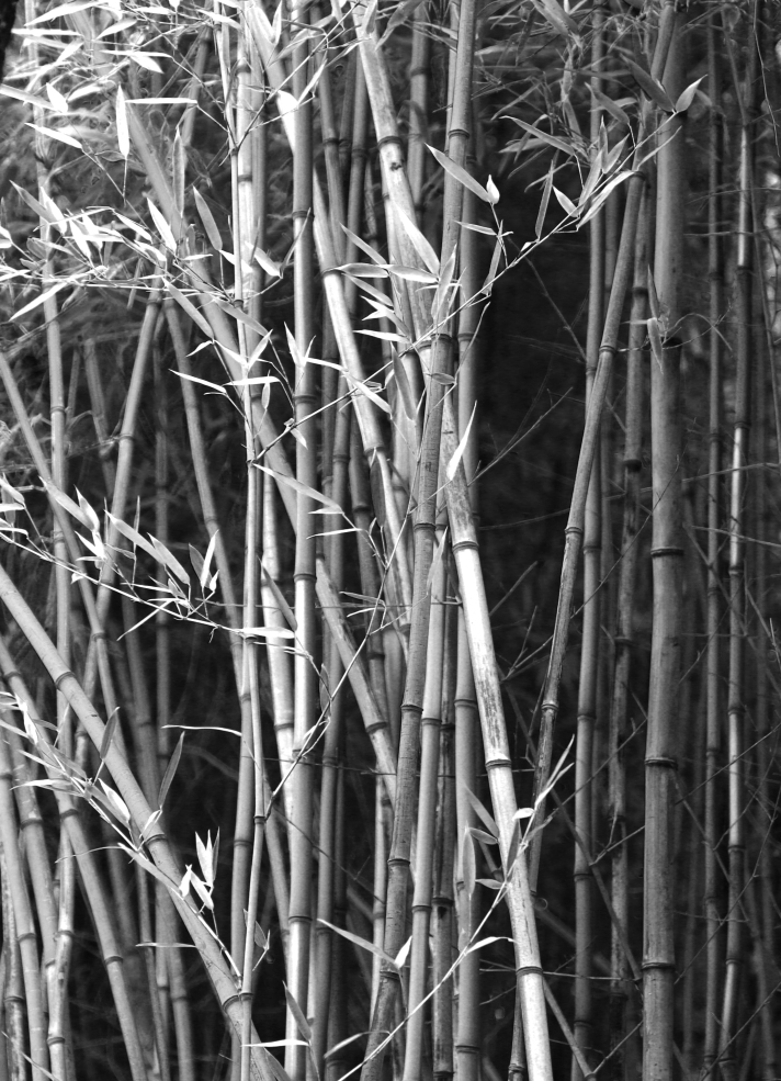 Arkansas native bamboo.