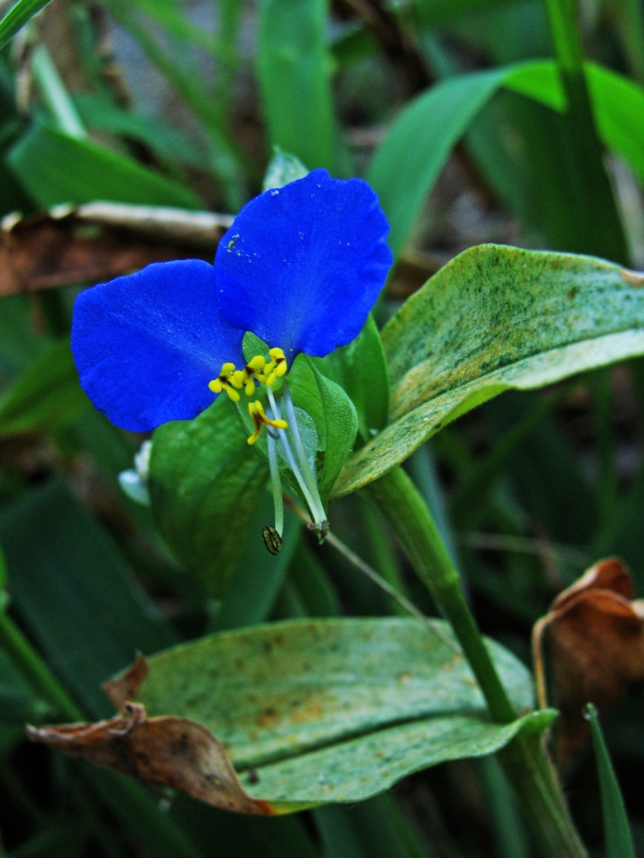 Blue flower surrounded by green.