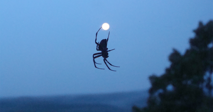 Spider appears to hold moon in his legs.