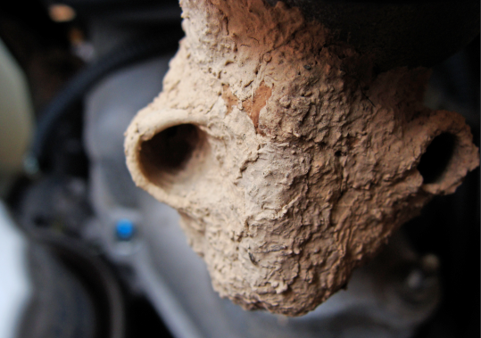 Mud dauber nest.