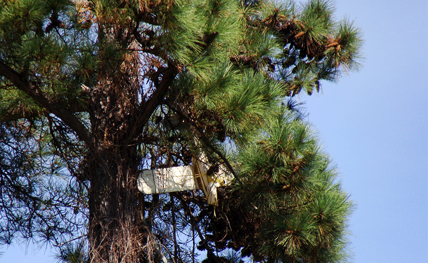 RC plane in tree.