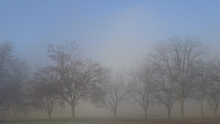 Trees against mist and blue sky.