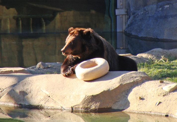Bear and doughnut toy.