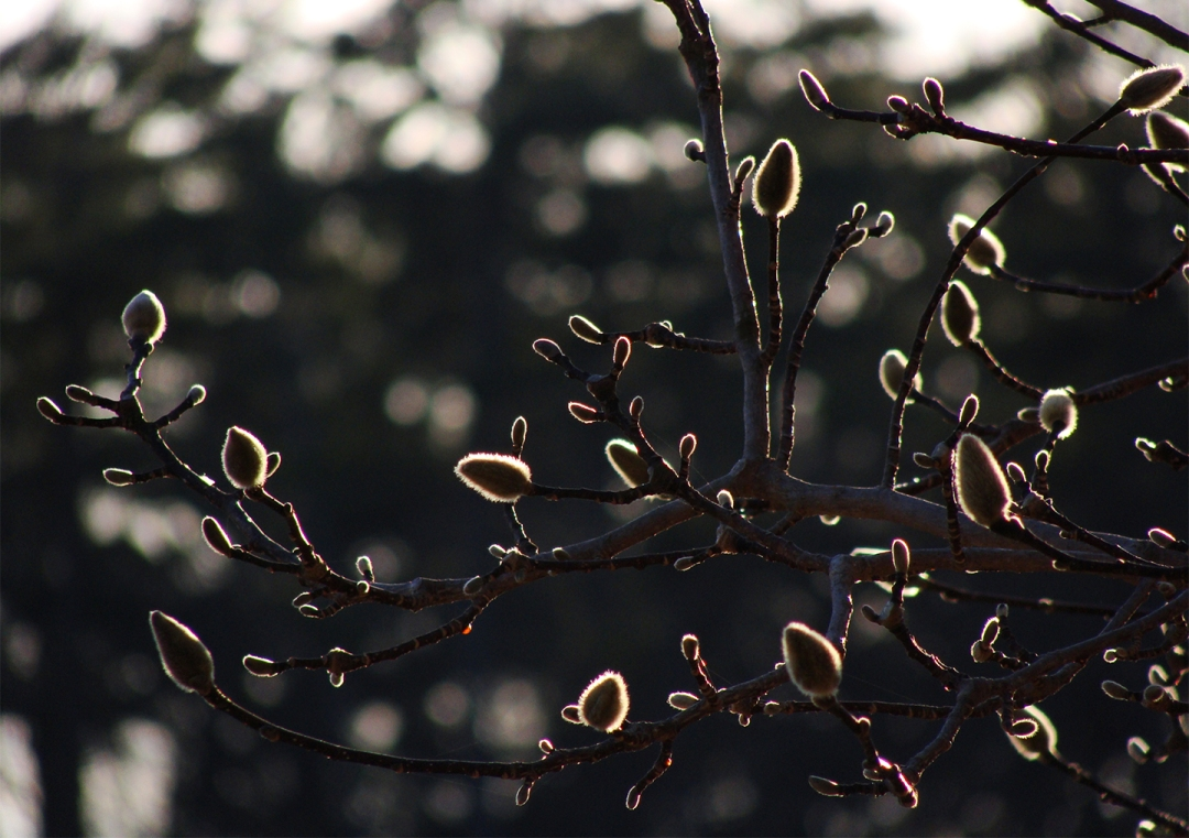 Backlit buds
