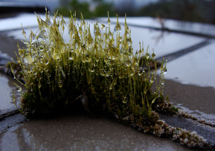 Water droplets on moss.