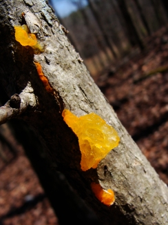 fungus in bark