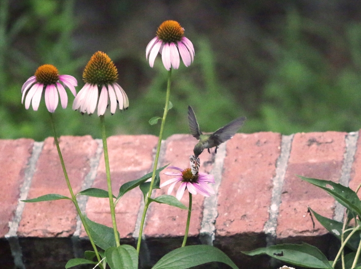 7-26 HB-Butterfly8-Edit
