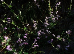 pink flowers against dark background