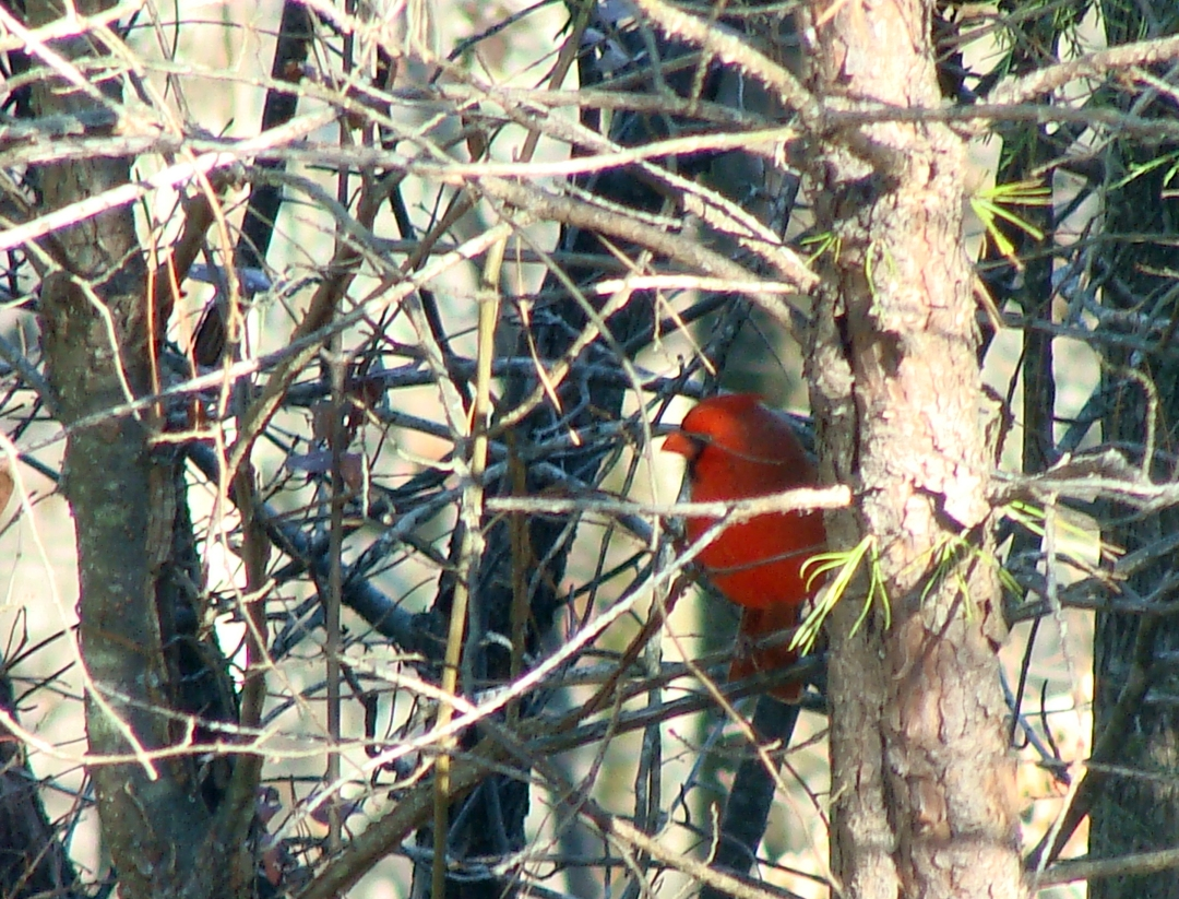 12-06 Cardinal Stick.jpg