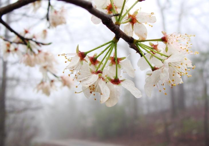 3-13-2016 Fog Flowers 6.jpg