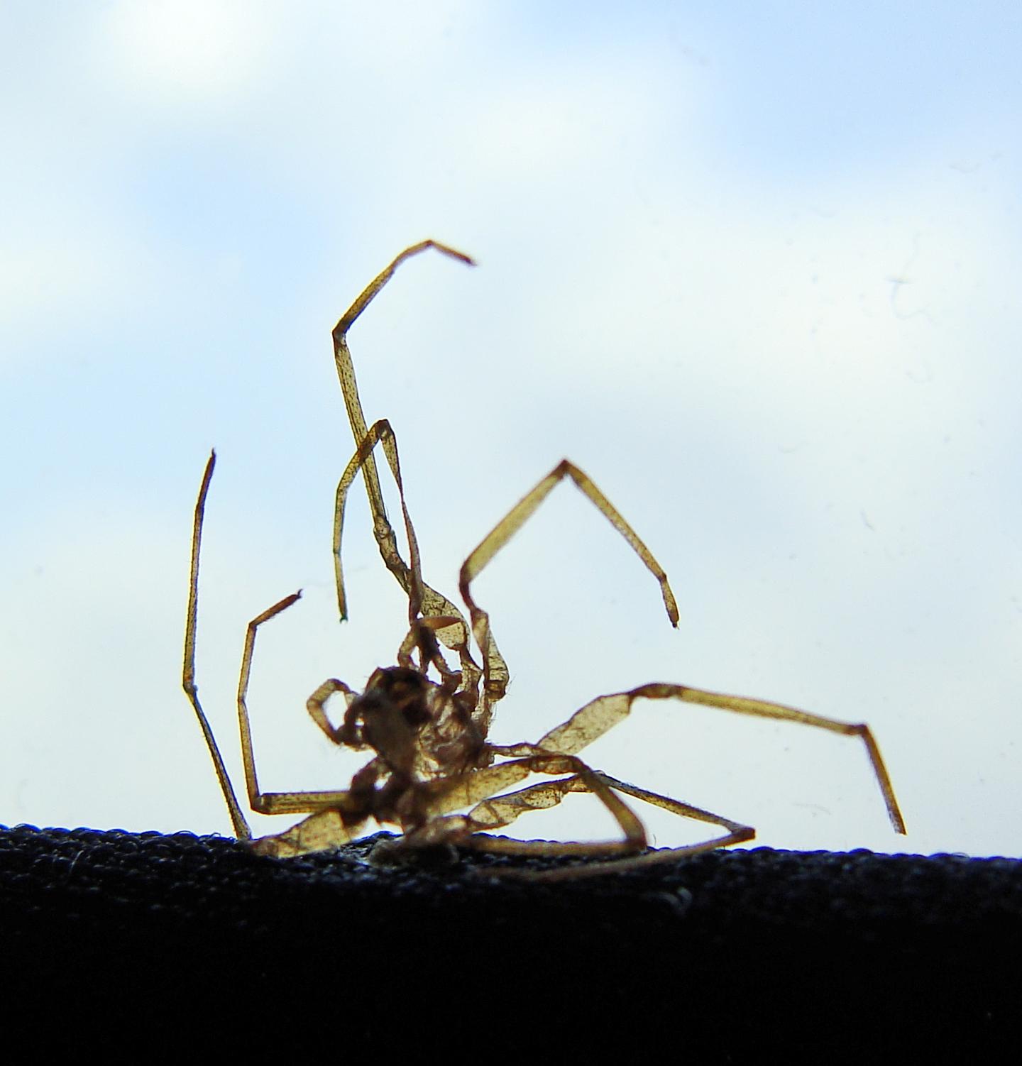 9-4-2016 Legging Spider 6.jpg