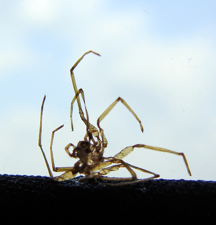 9-4-2016 Legging Spider 6.jpg
