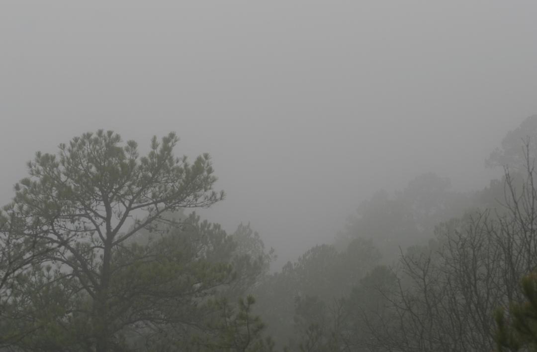 1-2-2017 Foggy Afternoon.jpg