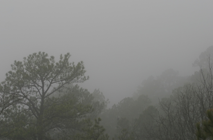 1-2-2017 Foggy Afternoon.jpg
