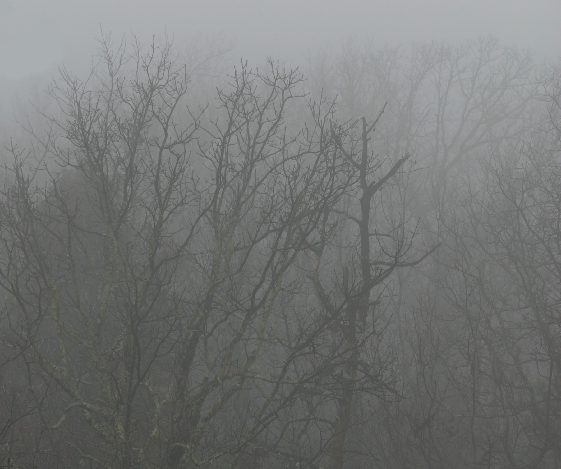 1-2-2017 Foggy Morning.jpg
