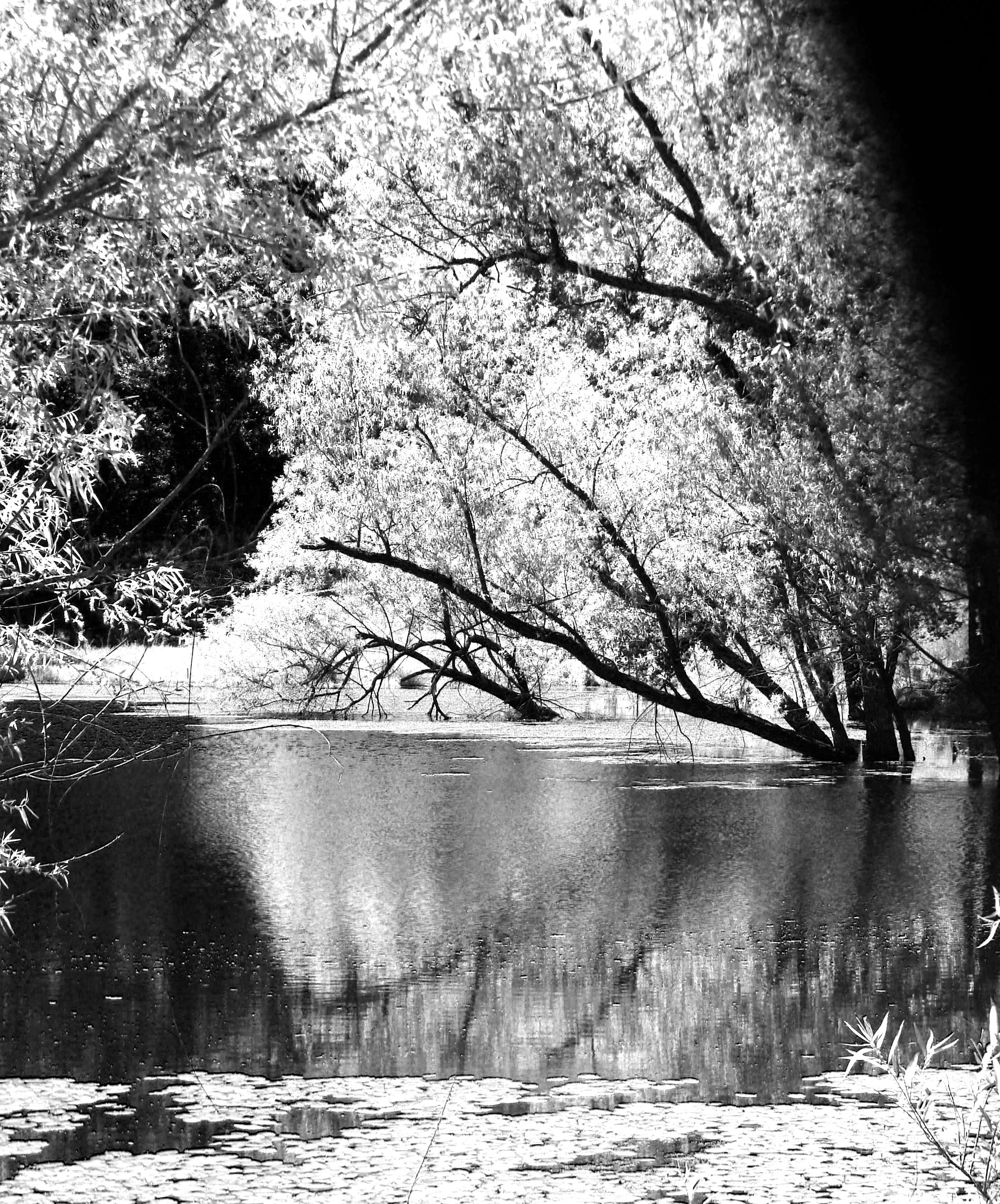 5-14-2017 Infrared Pond Vert.jpg