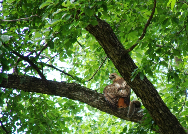 6-2-2017 One less squirrel 2-Cropped.jpg