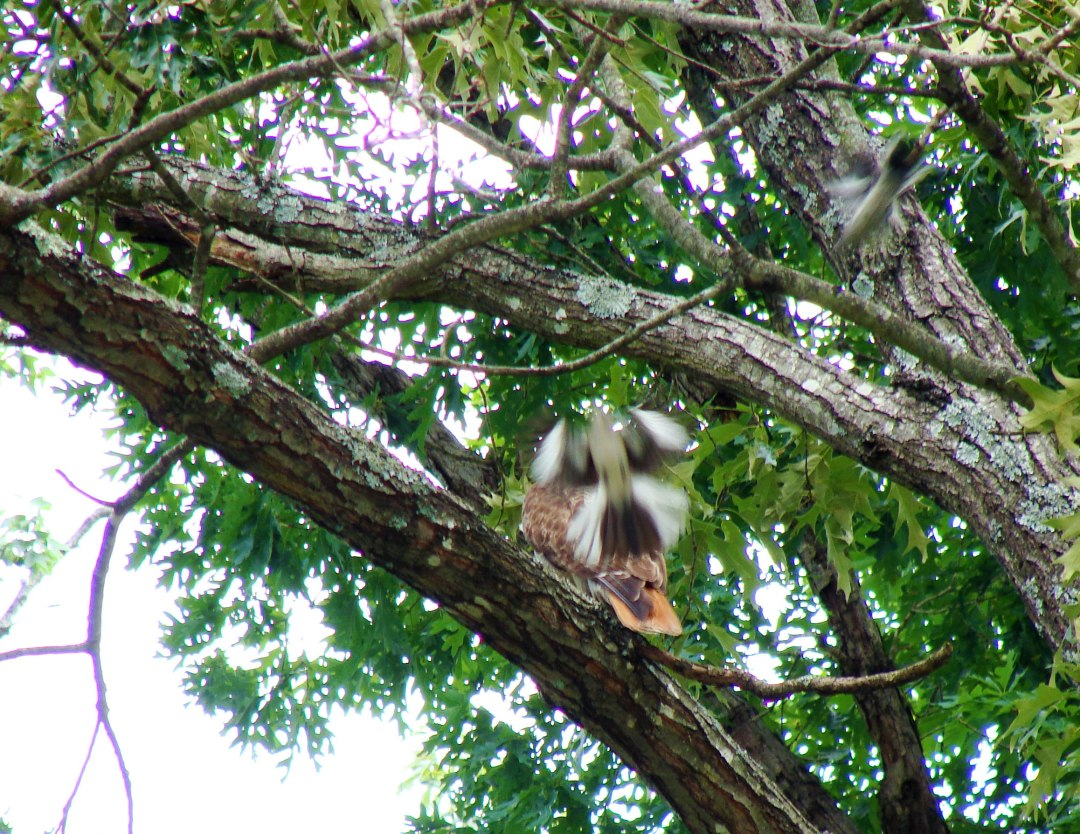 6-2-2017-Two-Teaming-on-Hawk-Web.jpg