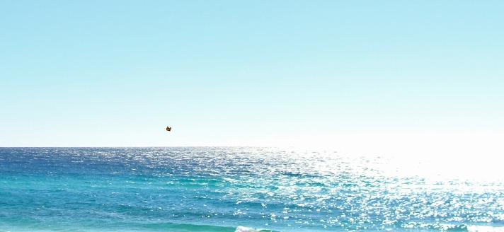 10-30-2017 Monarch Gulf.jpg