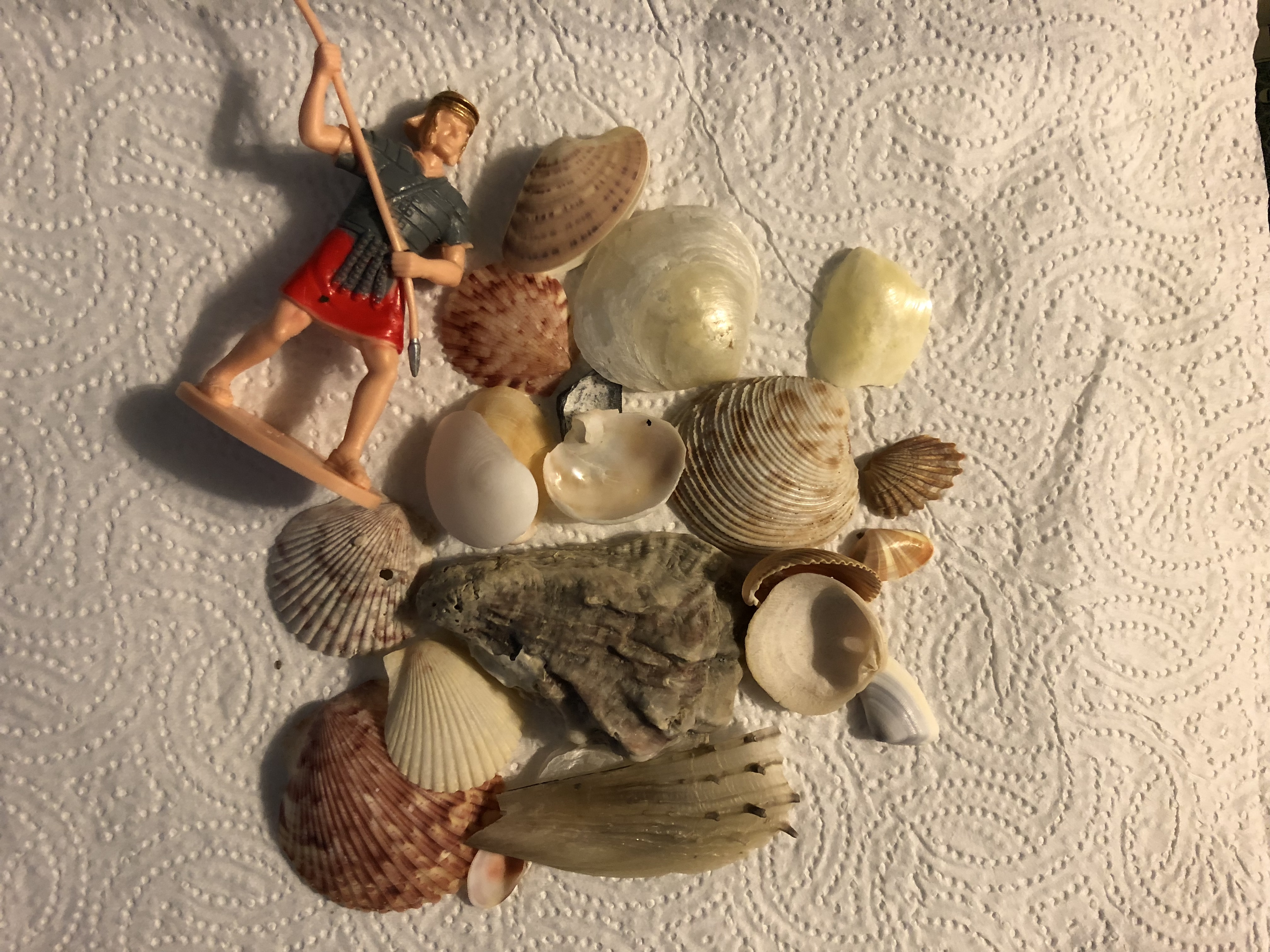 11-3-2017-Beach Findings.jpg