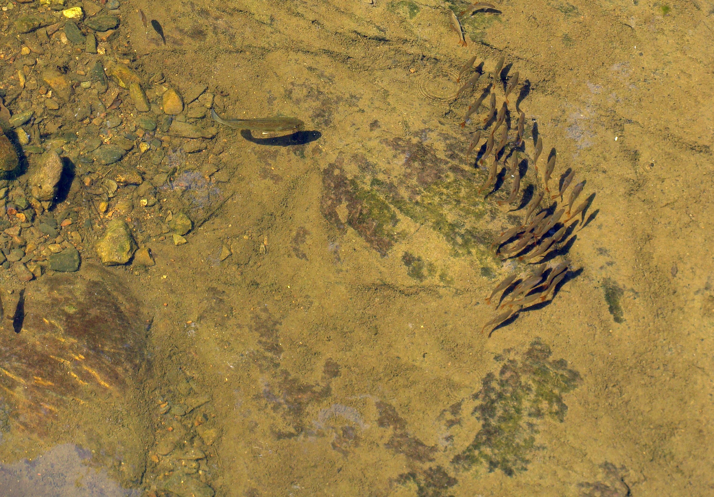 7-5-2018 Herding Fish.jpg